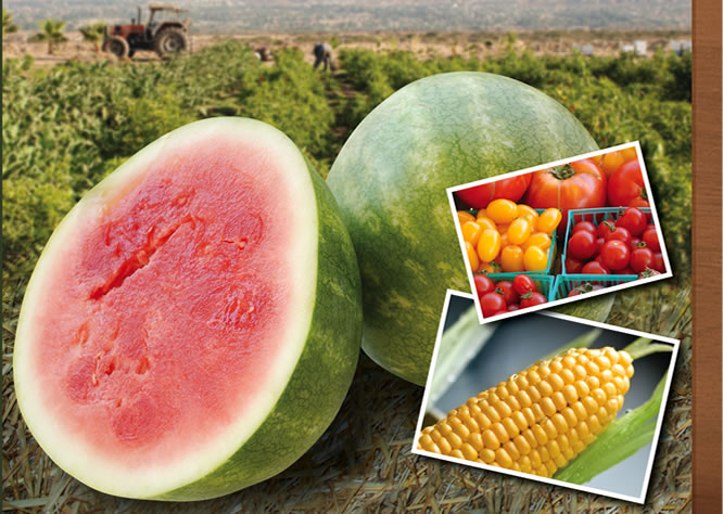Jacinto Farms | July - Watermelon, Corn, Heirloom Tomatoes, Strawberries