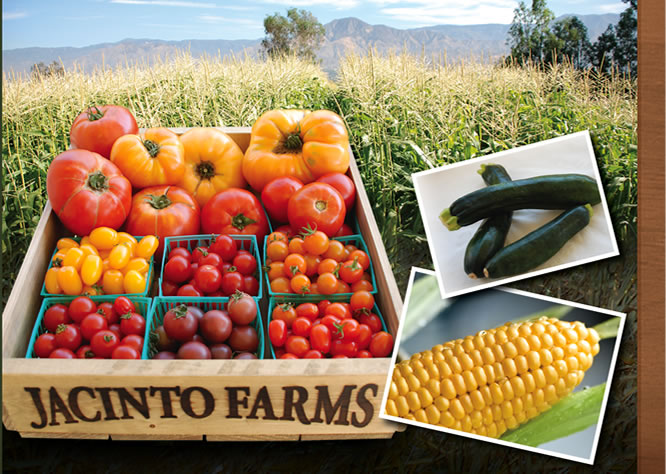 Jacinto Farms | June - Tomatoes, Corn, Strawberries, Squash, Potatoes, Chilies